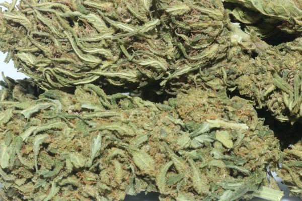 DrGanja Wholesale Cherry Blossom Untrimmed Hemp Flower